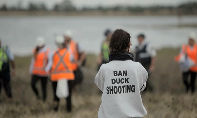 Anti-Hunting-Protester-Accidentally-Gets-Shot-In-The-Face-video-pictures-1
